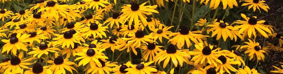 Garden design planting