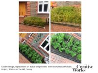 Garden Design, replacement of Buxus sempervirens with Rosmarinus officinalis Project, Walton on The Hill, Surrey