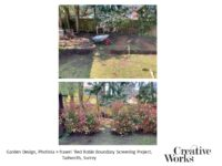 Garden Design, Photinia × fraseri 'Red Robin Boundary Screening Project, Tadworth, Surrey